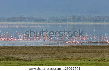 Millions of flamingos on lake in the Crater Ngorongoro National Park - Tanzania, Eastern Africa - stock photo