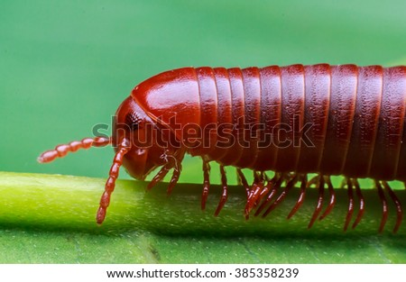 Millipede walking on a green leaf - stock photo
