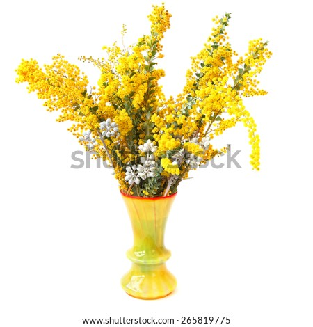 Mimosa flowers in yellow vase isolated on a white background. Blossoming branches of mimosa (Acacia) and an eucalyptus tree - bouquet of exotic plants in a yellow vase  - stock photo