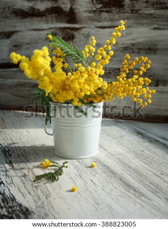 mimosa in enameled bucket on an old rustic background