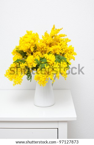 mimosa in white vase on white table - stock photo