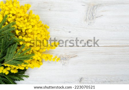 mimosa on white wooden background - stock photo