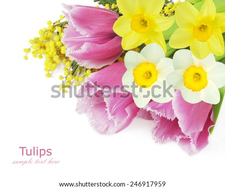 Mimosa,tulips and narcissus flowers isolated on white background with sample text