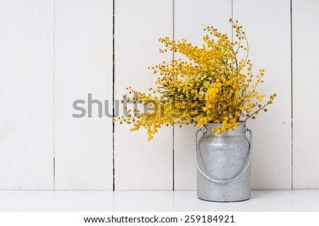 mimosa yellow spring flowers in vintage aluminum cans on white barn wall background - stock photo