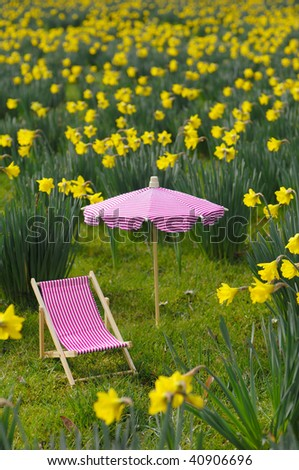Mini canvas chair and parasol in a daffodil meadow