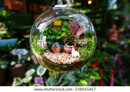 mini garden glass plant terrarium stock photo royalty free 538665667 shutterstock. Black Bedroom Furniture Sets. Home Design Ideas