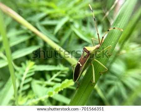 Mini insect on green background