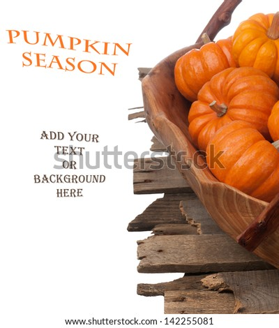 Mini Pumpkins in a Wooden Bowl on Weathered Wood Slats on White Background with Room for your Words, Text, or your Own Background. - stock photo