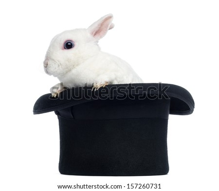 Mini rex rabbit goint out of a top hat, isolated on white