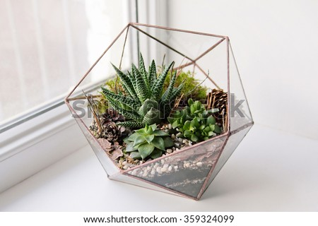 terrarium stock photos royalty free images vectors shutterstock. Black Bedroom Furniture Sets. Home Design Ideas