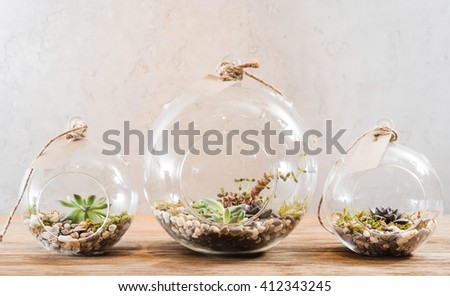 mini succulent garden in glass terrarium - stock photo