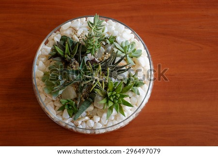 Miniature cactus succulent plant in a glass vase with white gravel - stock photo