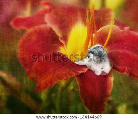 Miniature dog on a flower petal - stock photo