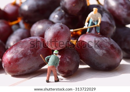 Miniature people picking red grapes. - stock photo