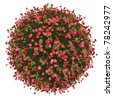 Miniature planet of small red flowers, isolated on white - stock photo