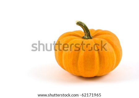 Miniature pumpkin on white background with copy space - stock photo