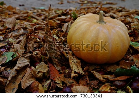 Miniature pumpkin on yellow leaves