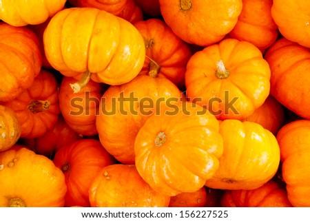 Miniature pumpkins - stock photo