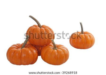 Miniature pumpkins on white background