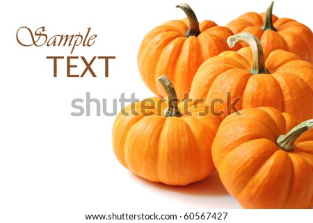 Miniature pumpkins on white background with copy space.  Macro with shallow dof. - stock photo