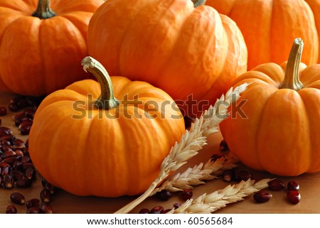Miniature pumpkins with spikes of wheat and kernels of red corn.  Macro with shallow dof. - stock photo