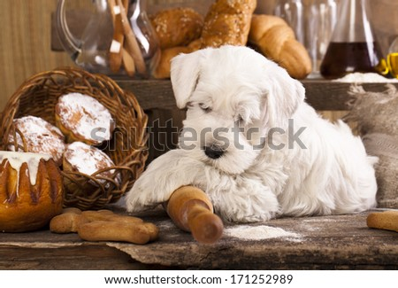 Miniature Schnauzer bake cookies - stock photo