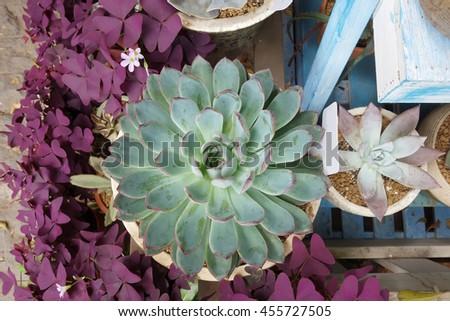 Miniature succulent plants decorated  - stock photo