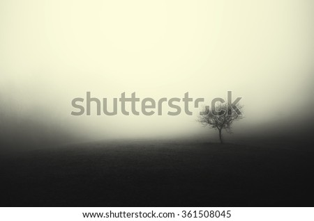 minimal dark landscape tree in fog - stock photo