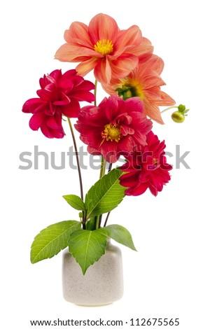 minimalistic  bouquet number 2 - mini dahlia red flowers  in ceramic pot vase isolated. Selective focus - stock photo