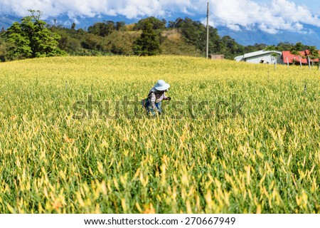 Mining Lilies - stock photo