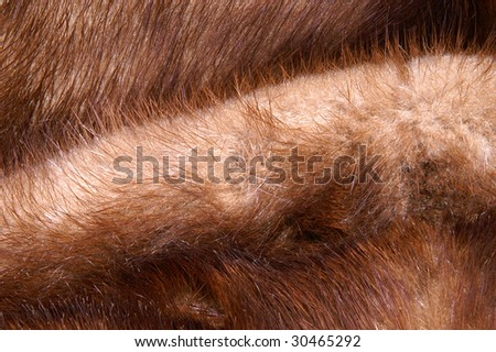 Mink Fur Close-Up for Use as a Background
