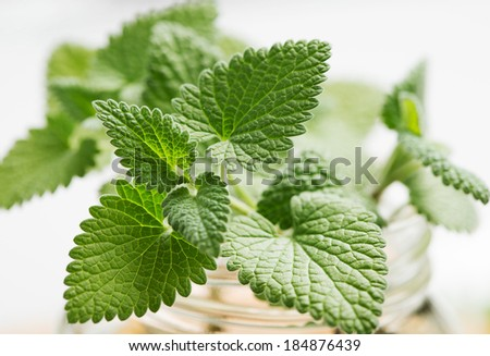Mint - stock photo