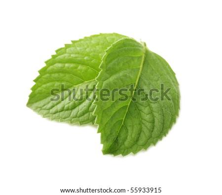 mint - stock photo