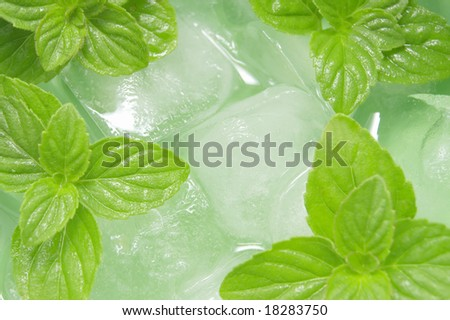 mint and ice - stock photo