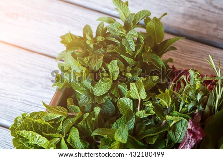 Mint and lettuce on tray. Edible greens on wooden background. Fragrant herbs for salad. Taste of summer. - stock photo