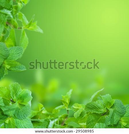 Mint Background - stock photo
