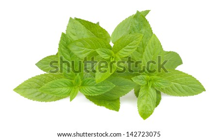 Mint bunches isolated on white