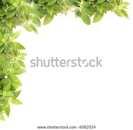mint frame - stock photo