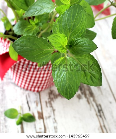 Mint herb growing in a pot on wooden boards - stock photo