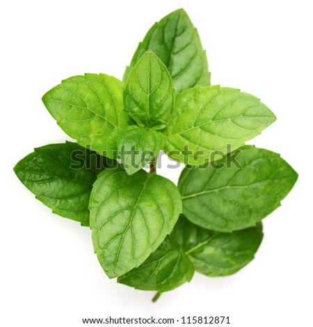 Mint in closeup - stock photo