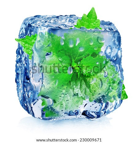 Mint in ice cube isolated on white - stock photo