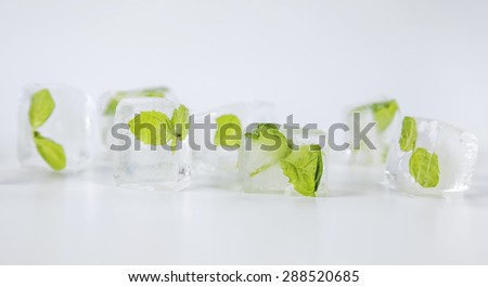 mint in ice cubes isolated on a white background - stock photo