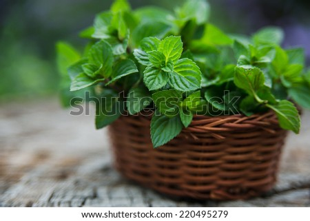 Mint  in small basket on natural wooden background, peppermint, selective focus, close up