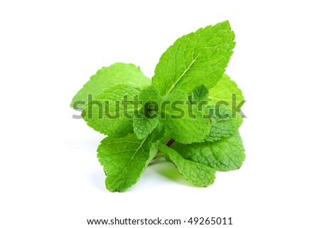 mint isolated - stock photo