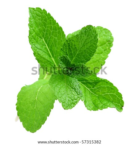 mint isolated - stock photo