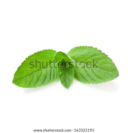 mint isolated on a white background - stock photo