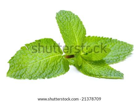 Mint isolated on white - stock photo