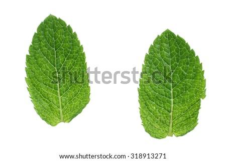 mint isolated on white background - stock photo
