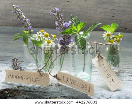 mint, lavender and  chamomile  - stock photo