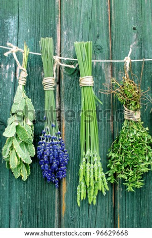 mint, lavender and thyme hanging on a leash - stock photo